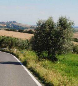 Volterra area